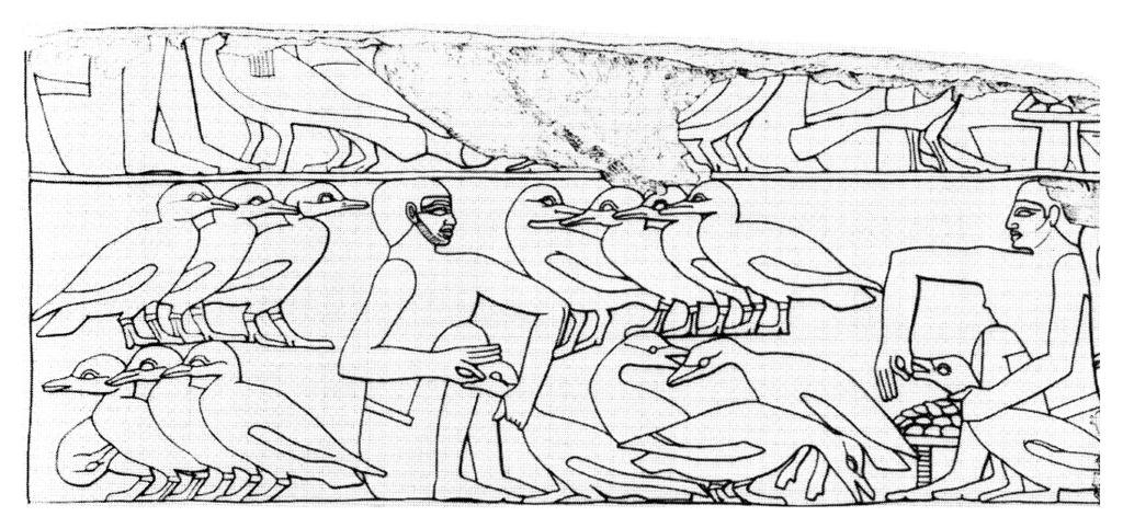 Le foie gras dans l'Egypte antique